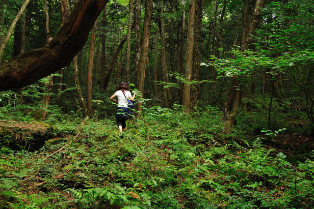 "Japan's beautiful ""suicide forest"" sees increase in sightseers as it tries to shake its dark image"