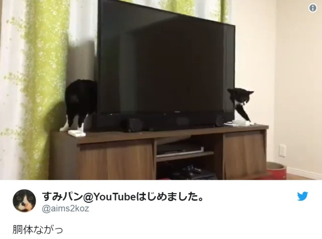 "Japanese Twitter-user shares video captured of ""the world's longest cat"", Internet is impressed"