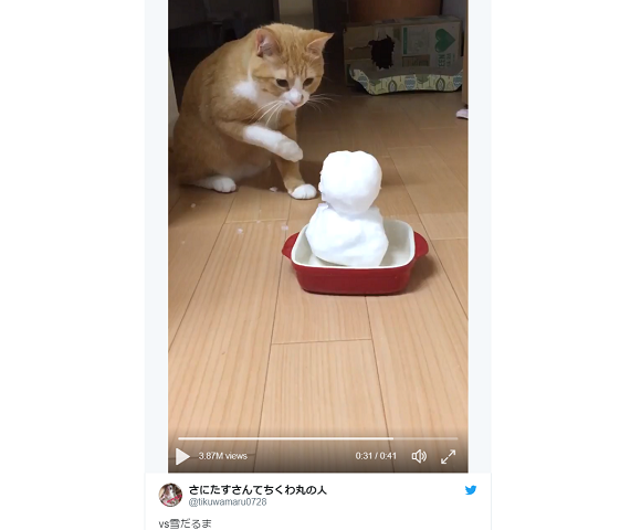 Japanese cat somehow manages to lose fight with snowman, still wins Internet's heart【Video】