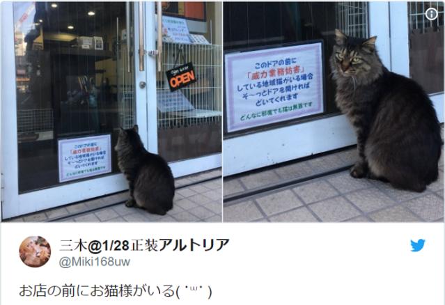 "Tokyo cafe doesn't bat an eye at ""obstruction of business"" kitties【Monday Kickstart】"