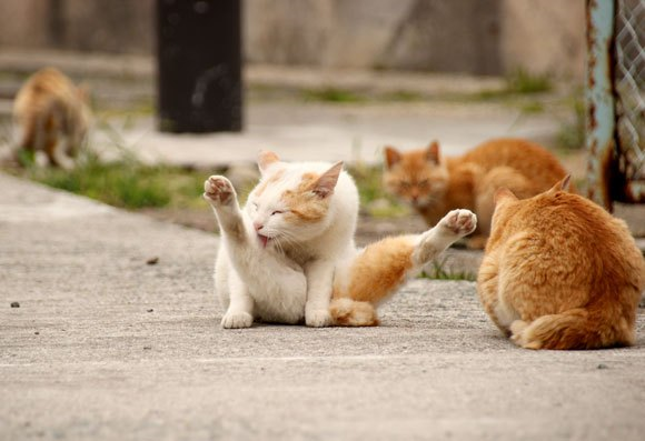 Japan's most famous cat island moving towards plan to spay, neuter all of its kitty inhabitants