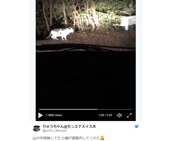 Stray cat in Japanese mountains guides visiting humans out of woods in the dark of night【Video】