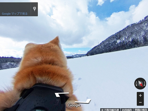 Tour Akita Prefecture from the back of an Akita Inu Dog with Google's adorable doggie Street View