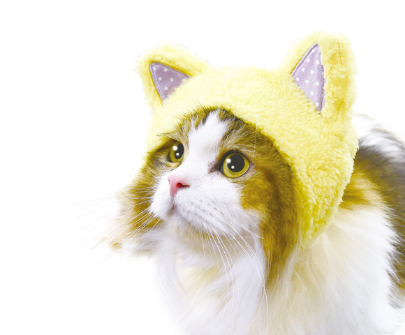 Japanese company's fashion hoods let you add cute cat ears…to your cat