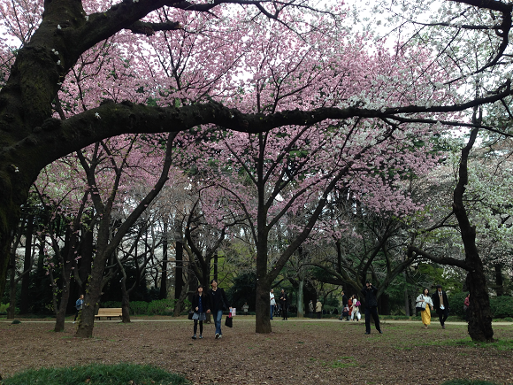 """""""People who break sakura branches are idiots"""" – Twitter outcry over cherry blossom accessories"""
