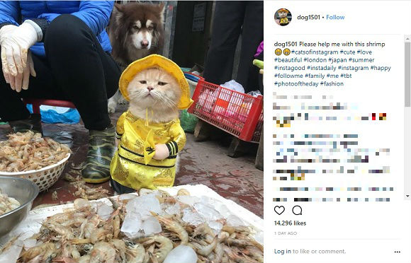 Vietnam's cutest fishmonger is a swanky cat, drives a hard bargain with his sea-captain stare