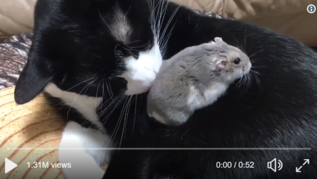Videos of cat and hamster taking adorable cuddly naps together melt Japan's hearts【Videos】