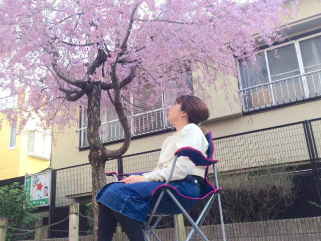 Solo sakura: Four reasons to have a one-person cherry blossom-viewing party