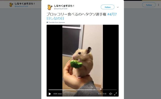 【Breaking】This hamster kind of sucks at eating broccoli