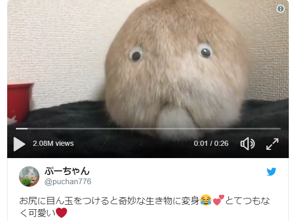 Japanese Twitter user sticks googly eyes on pet bunny's butt, accidentally creates monster【Video】