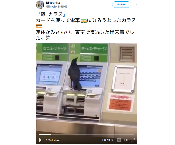 Crow surprises Japanese commuters by attempting to buy train ticket from a machine【Video】