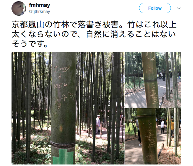 "Arashiyama bamboo forest in Kyoto ""crying"" as tourists vandalise trees"