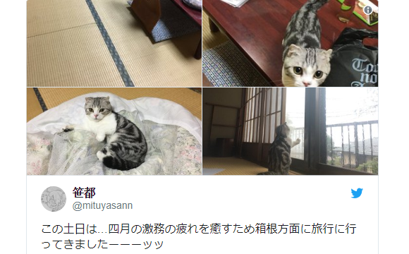 Rent-a-kitty Rooms! Twitter user liveblogs ryokan inn with a special 'rental cat' option