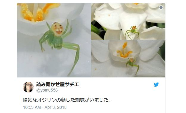 Spider discovered that looks like an old man having a really good time