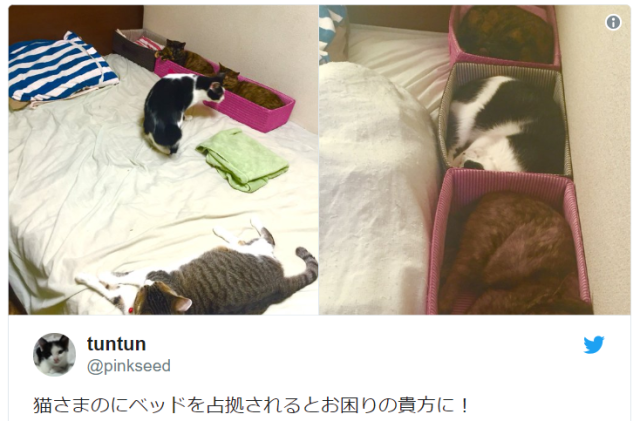 Japanese cat lover has an ingenious plan to keep your cat from hogging your bed all night