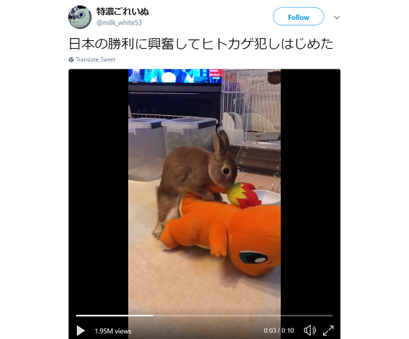 Pet rabbit celebrates Japan's World Cup victory by humping Pokémon's Charmander【Video】
