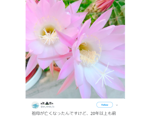 Love blooms after loss: Japanese netizen commemorates grandparents' romance, gardening skills