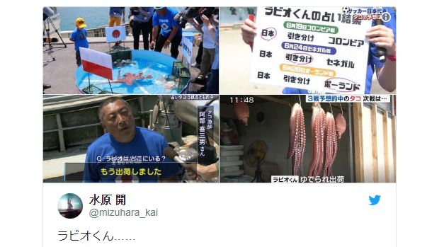 Japan's World Cup match-predicting octopus gutted after loss to Poland… literally