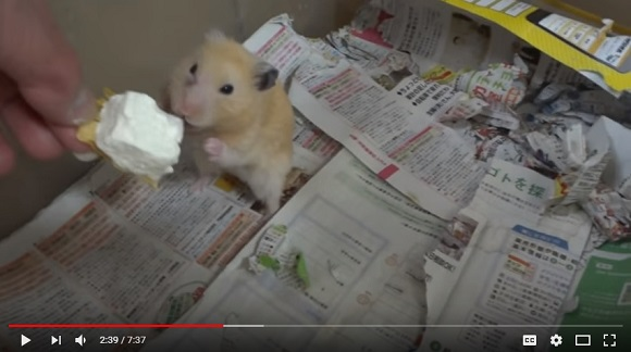 Japanese netizens outraged over famous YouTube channel's treatment of hamsters【Videos】