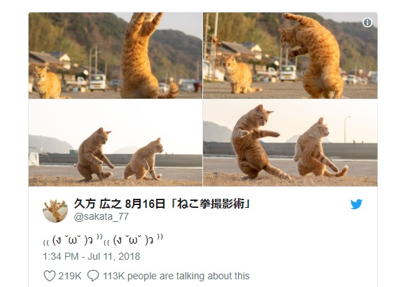 Cat photographer captures fascinating shots of our feline friends dancing and practicing kung fu
