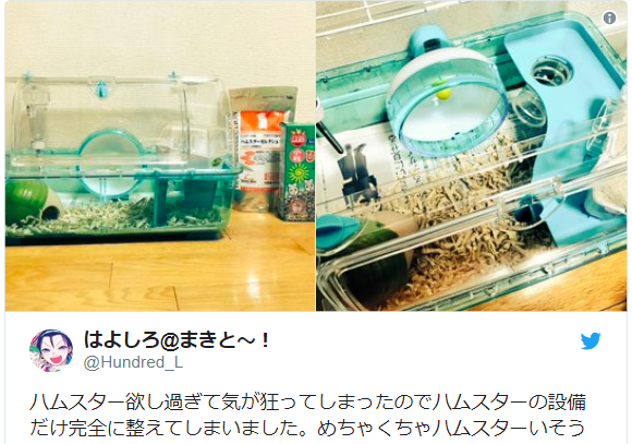 Japanese Twitter user's dream of having a pet hamster is a roller-wheel of emotions