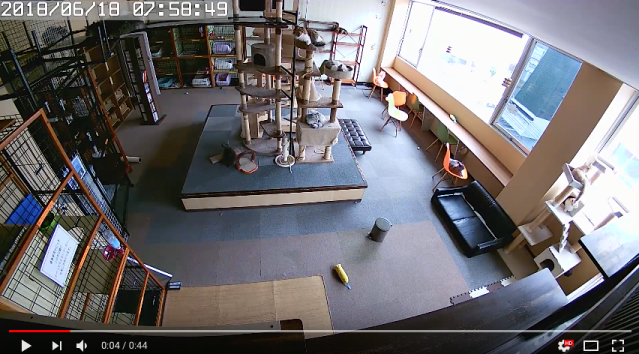 Cat cafe video shows reaction of felines before, during and after an earthquake in Japan