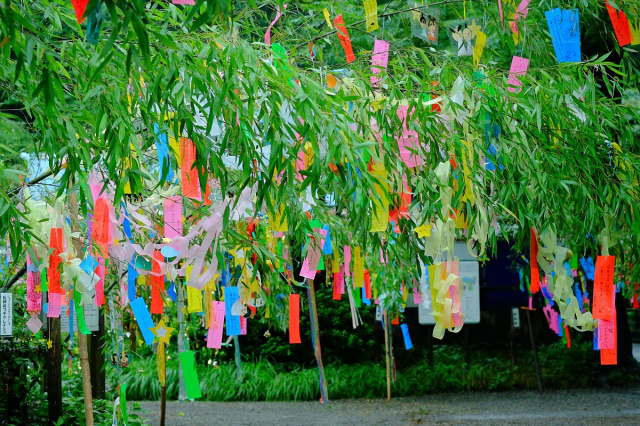 School in Japan removes traditional Tanabata decorations for being incongruent with Christianity