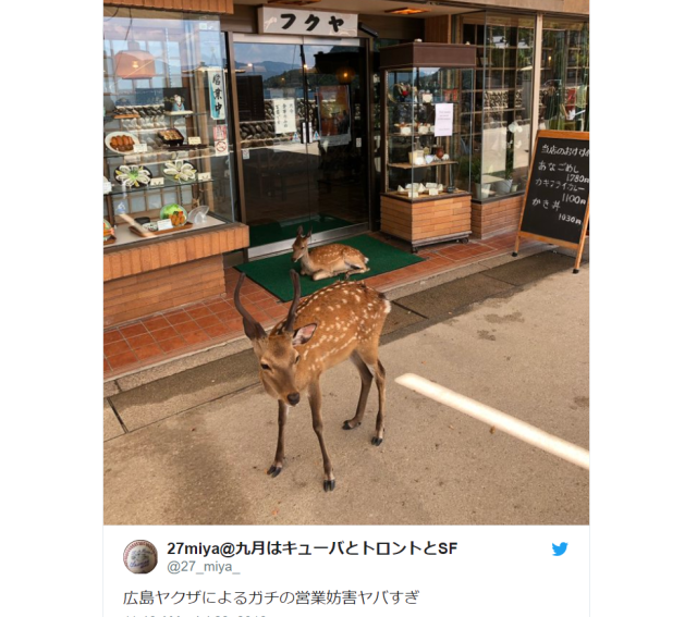 "Gang of ""yakuza deer"" regularly takes over Japanese restaurant's street-side entrance【Photos】"