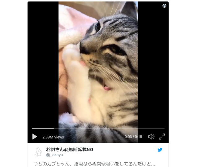 Videos of Japanese cats sucking their own paws melts the Internet's heart【Videos】