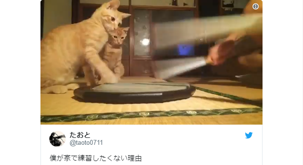 Adorable cats from Japan impede drum practice, get our hearts drumming too【Video】