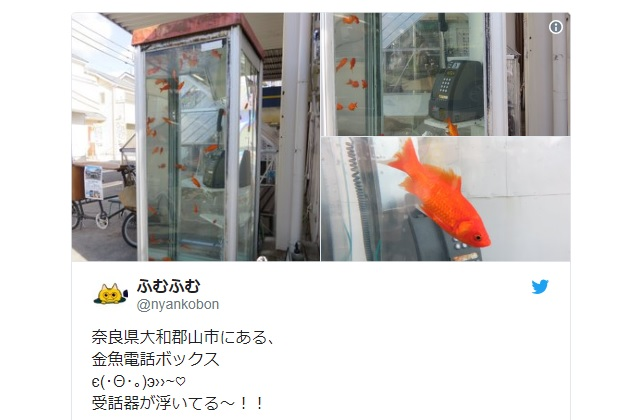 Awesome phone booth aquarium removed from Japanese city due to copyright infringement