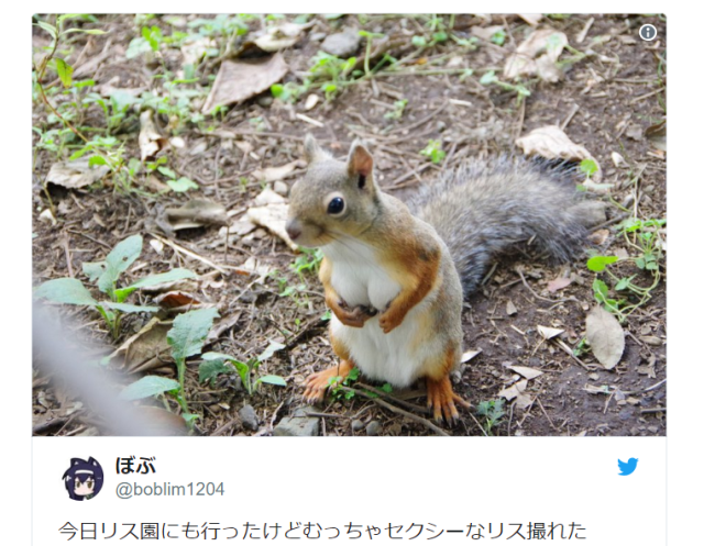 Japanese Twitter falls in love with the sexiest squirrel Tokyo has ever seen
