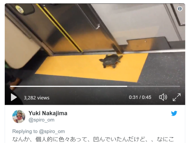 Turtle spotted riding Tokyo subway makes commuting in Japan's busiest city adorable【Video】