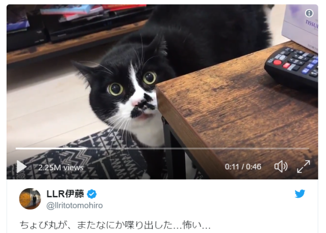 "Cats in Japan say ""nyao,"" except for this one that says ""ololiloliloliloliloliiiloli""【Video】"
