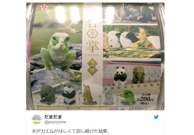 Wanting a frog, man gets too many praying animals from capsule machine, creates cute, creepy cult
