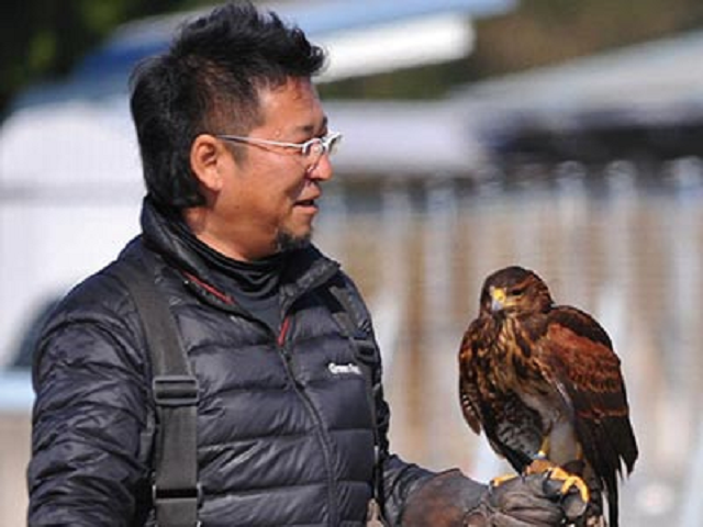 Fed-up Japanese city hires a hawk to chase occupying army of crows away from city hall【Videos】