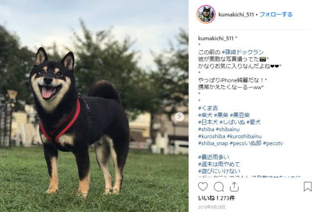 Adorable pet dog's Japanese-style housecleaning video convinces the Internet he's a very good boy