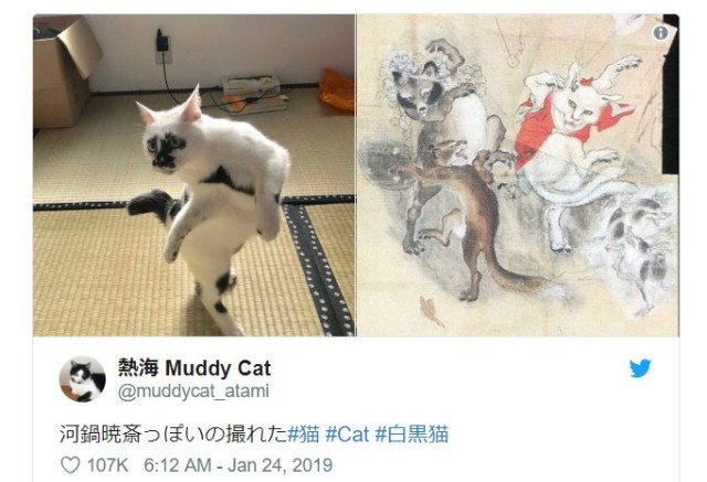 Is this pet kitty in Japan a real-life nekomata mythical cat monster?