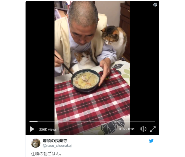 Japanese monk's breakfasts with cats are the most important/cutest videos of the day