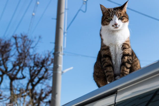 """Touching story of a Japanese """"messenger cat"""" connects distant neighbors on social media"""