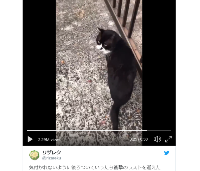 Twist ending to Japanese cat video shows they aren't always graceful, but can still be adorable