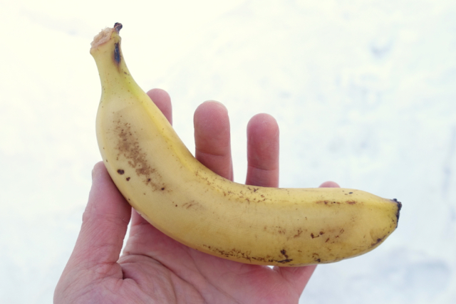 Is it cold enough in Hokkaido for banana hammers?