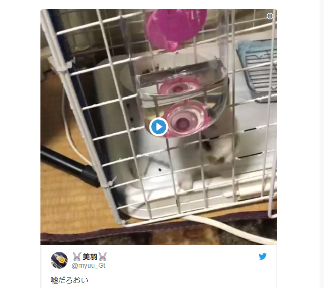 """Rabbits are liquid?"" Escape artist bunny breaks free of its cage in Japan【Video】"