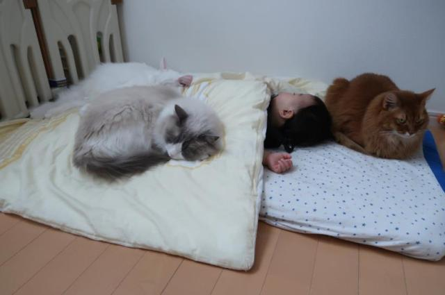 "Small children have magnetic ""cat-attracting"" ability, adorable photos from Japan show"