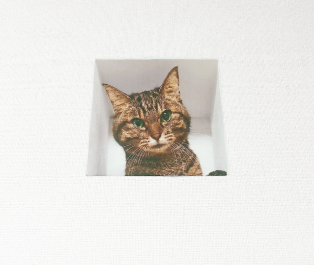 Optical illusion sticker from Japan gives cat companionship to people in no-pet apartments