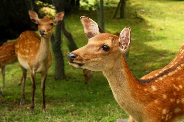 Nara deer have a heartfelt message for tourists in new travel poster