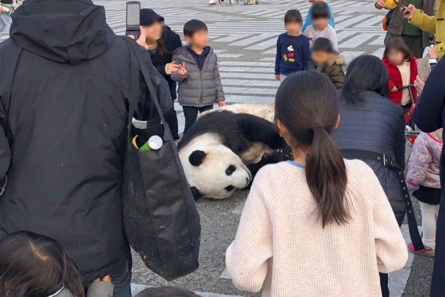 Panda sightings in Tokyo cause frenzy on social media