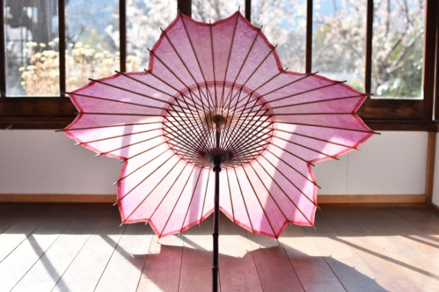 Enjoy the cherry blossoms under a sakura umbrella