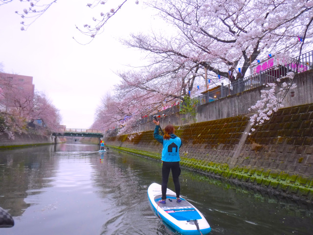 Viewing Yokohama cherry blossoms on a stand up paddle board!