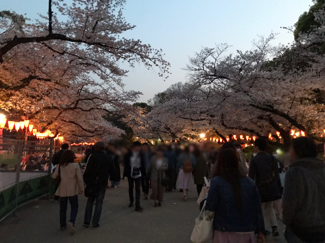 We went hanami cherry blossom viewing in gorgeous Ueno Park with complete strangers